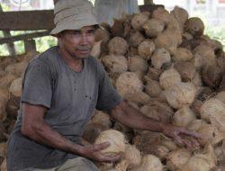 Potensi Kelapa Aceh dan Minyak Kelapa Murni Untuk Anti Virus Corona