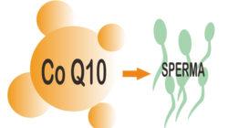 Ini Manfaat Coenzyme Q10 (CoQ10) Untuk Kesuburan Pria dan Wanita